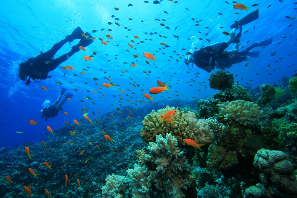 Sığacık'ta Scuba Diving